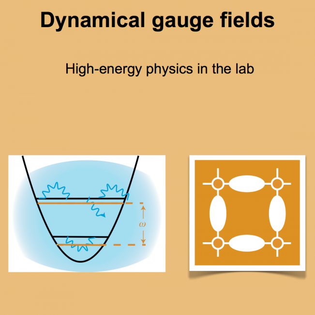 Dynamical Gauge Fields
